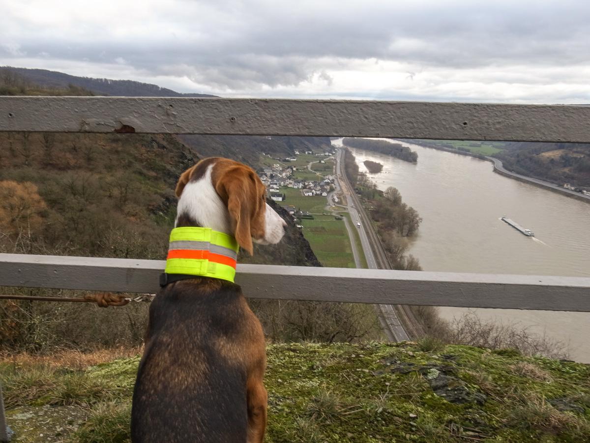 Aussicht von der Rheinbrohler Ley